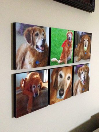pet-photo-tile-display